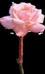 FarmerLisa_SprWhisp_Flower-RosePink.png