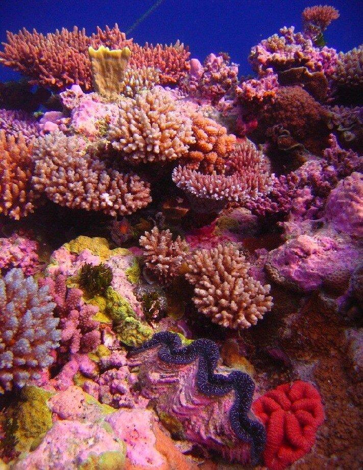 Подводный мир-Kораллы 40685