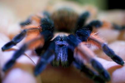 В заброшенном доме в Ирландии было обнаружено больше ста ядовитых пауков