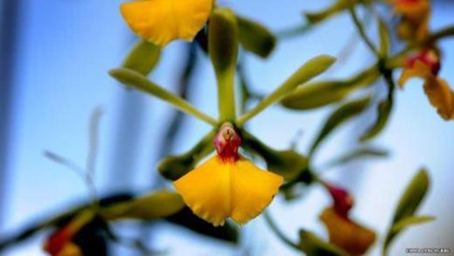 Фестиваль экзотических орхидей в Лондоне