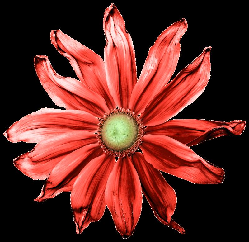 feli_joa_red flower1.png