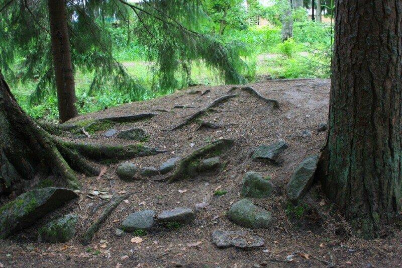 Камни и корни
