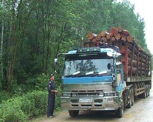Экологи в Приморье требуют отменить проведение аукциона на аренду более 400 тыс. га леса