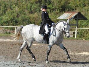 В Находке пройдет турнир по конному спорту