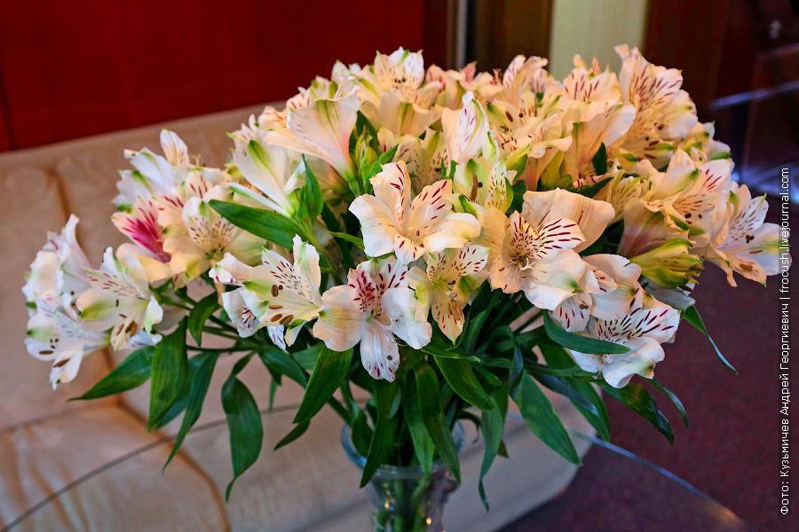 Цветы в холле шлюпочной палубы теплохода «Н.А.Некрасов»
