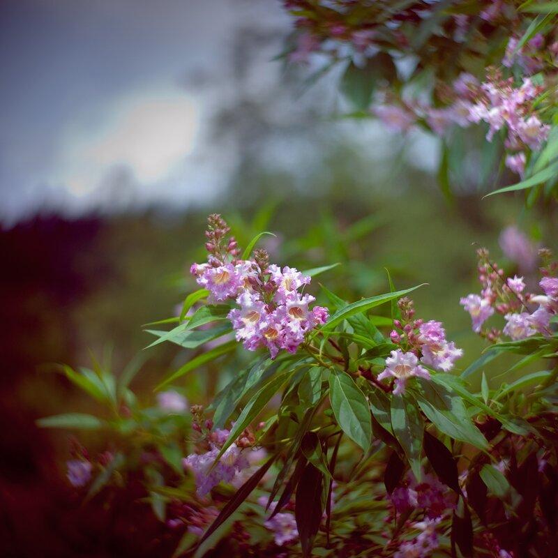 профессиональное фотосъемко цветов фотографыы