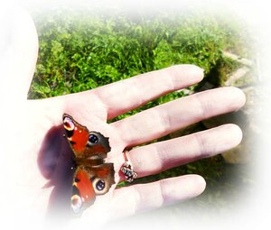 Моя знакомая бабочка