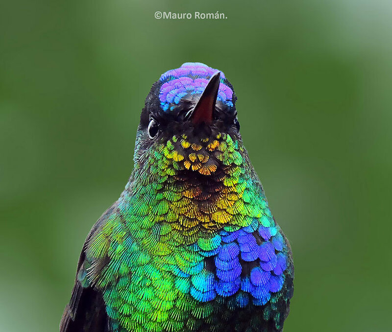 colibri-07.jpg