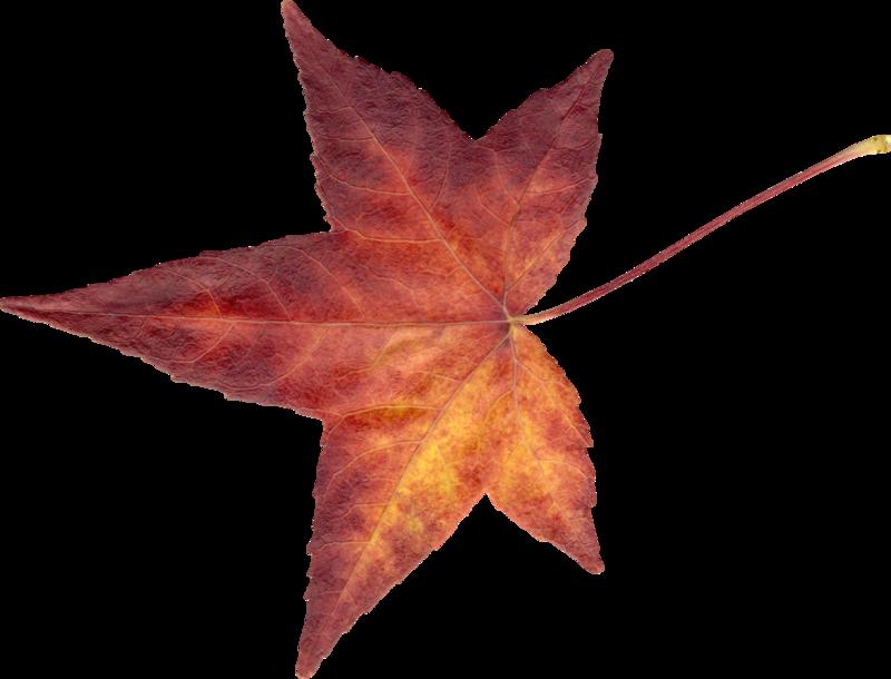 Carena_Autumn Crunch_66.png