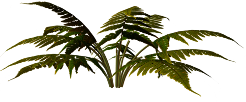 Трава клипарт