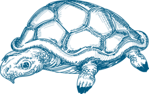 морская черепаха