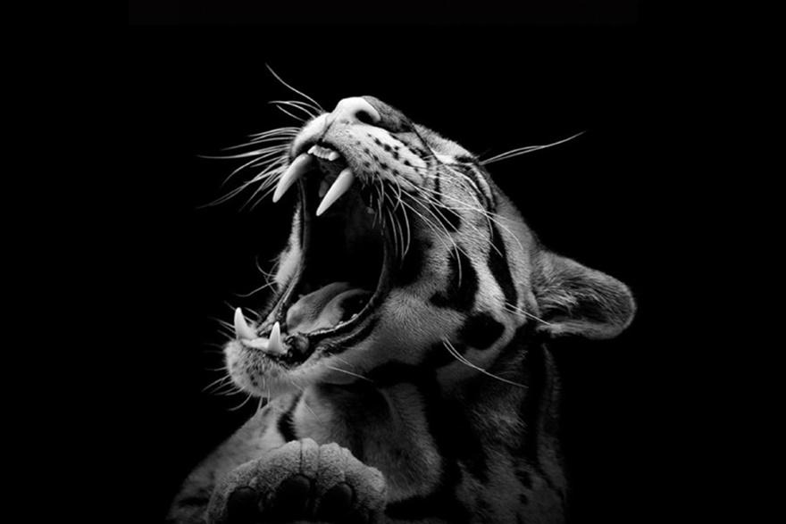 Лукас Холас. Черно белые портреты животных 0 1419c0 f3e4b1f7 orig
