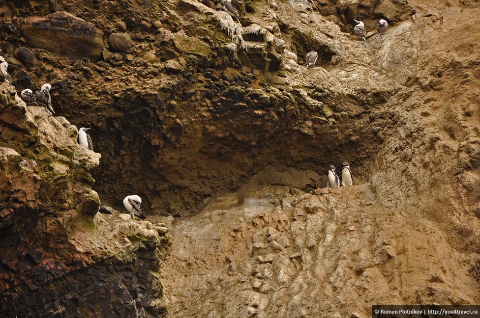 0 16174c 4e7aa88f orig Национальный парк Паракас и острова Бальестас в Перу