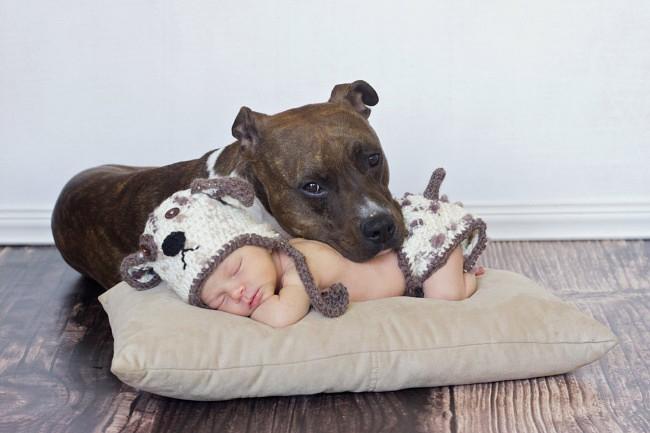Картинки по запросу домашние животные