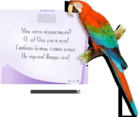 Картинки по запросу предсказания с попугаем
