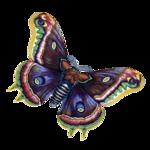 Бабочки  0_6b148_dc543322_S