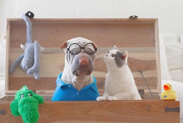 Самый фотогеничный шарпей в мире и его друг котик (18 фото)