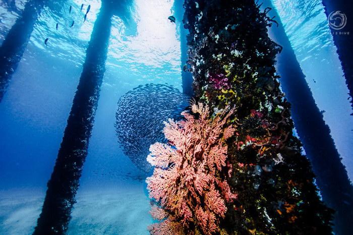 Дайвер Лукас Шольц-Нартовски (Lukas Szolc-Nartowski) сделал удивительные фотографии подводного «леса