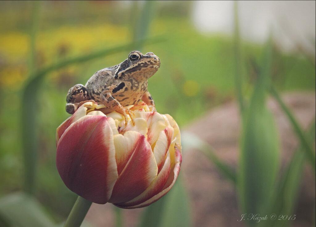 Лягушка и цветок.