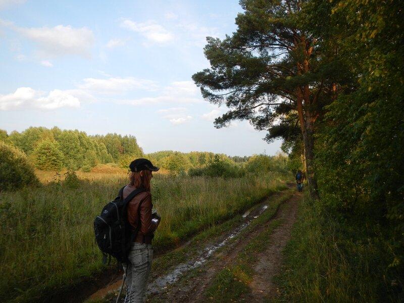 дорога вдоль сосен на берегу оз. Холуново