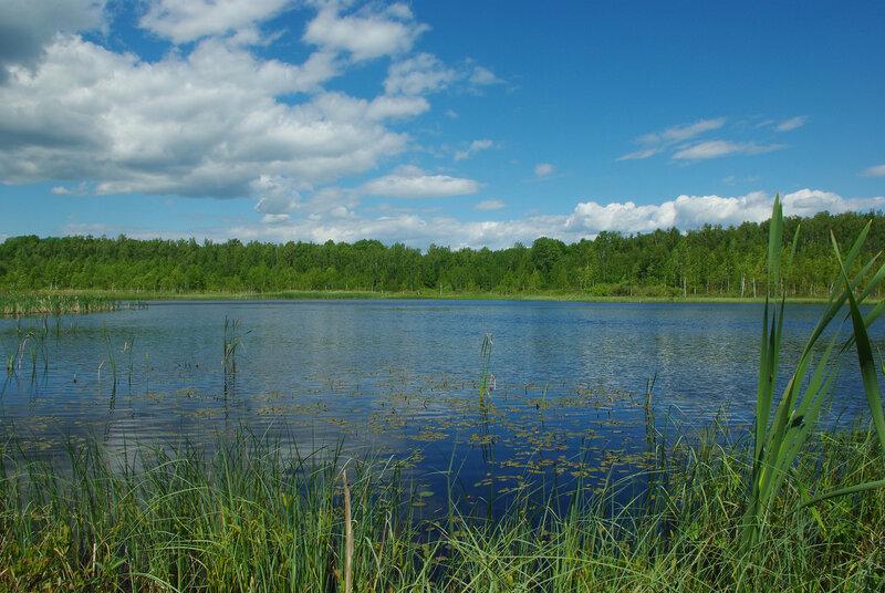 На Галкинском болоте