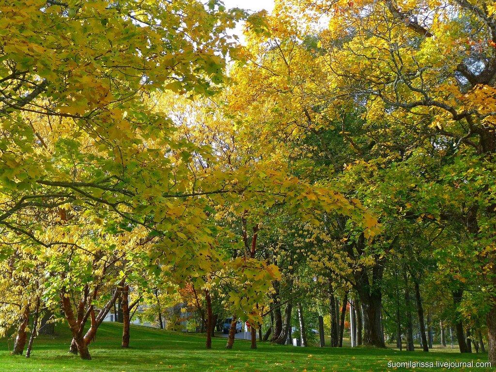 Осень в городе, 1 октября 2014 г.