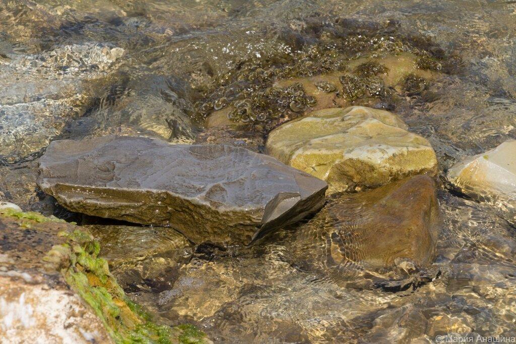 Камни и водоросли, Черное море