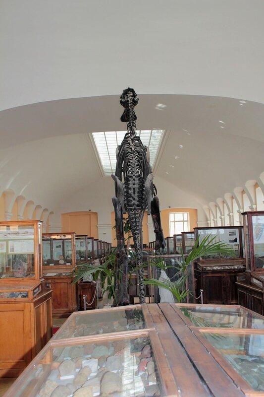 Амурский манджурозавр