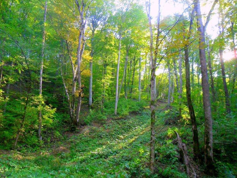 В лесу ... SAM_4088.JPG