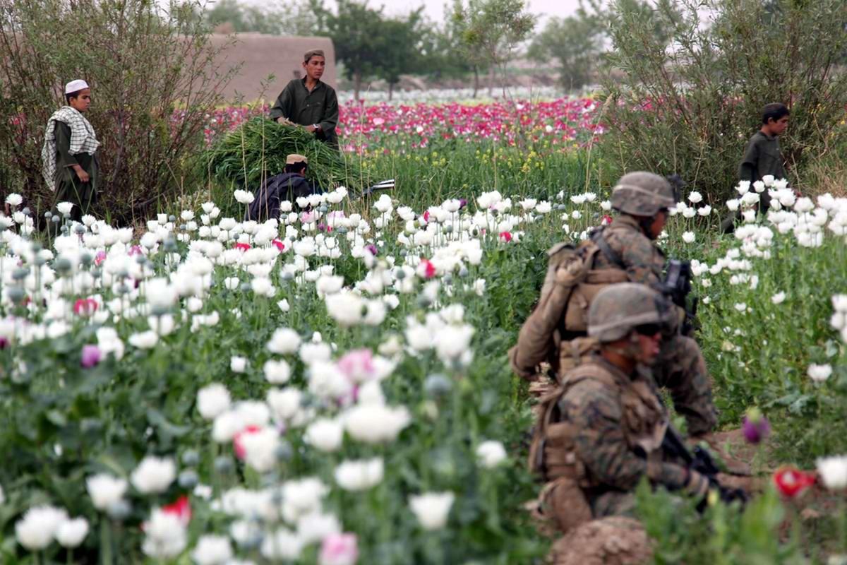 Посреди маковых полей Афганистана - фотографии военнослужащих корпуса морской пехоты США (30)