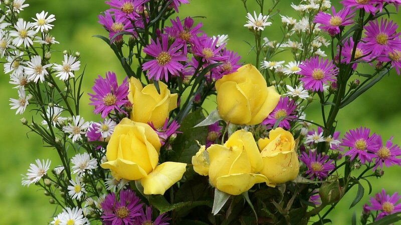 roses-desktop-widescreen-background-wallpaper-yellow-rose-