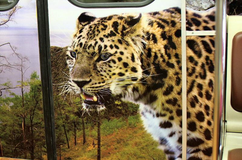 Очень сердитый леопард