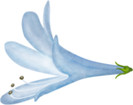 CreatewingsDesigns_SP_Flowers7d.png