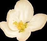 NLD Flower.png