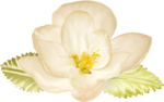 NLD Flower 5.png