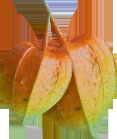 Carena_Autumn Crunch_96.png