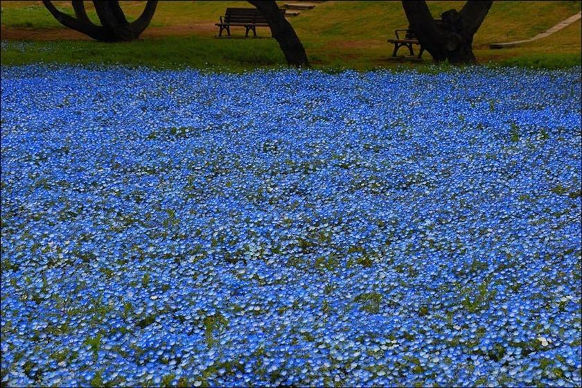 Живописный японский парк Хитати Кайхин 0 1422bf d6d56cc7 orig
