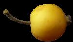 Yellow Autumm