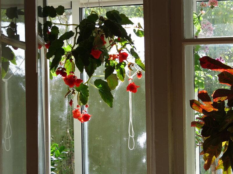 Необычное поведение растений - webgarden - сохраненная запис.