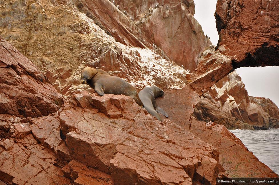 0 161745 d0e0d914 orig Национальный парк Паракас и острова Бальестас в Перу