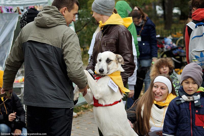 Осень. Фестивальный парк. Собаки. 04.10.14.09..jpg
