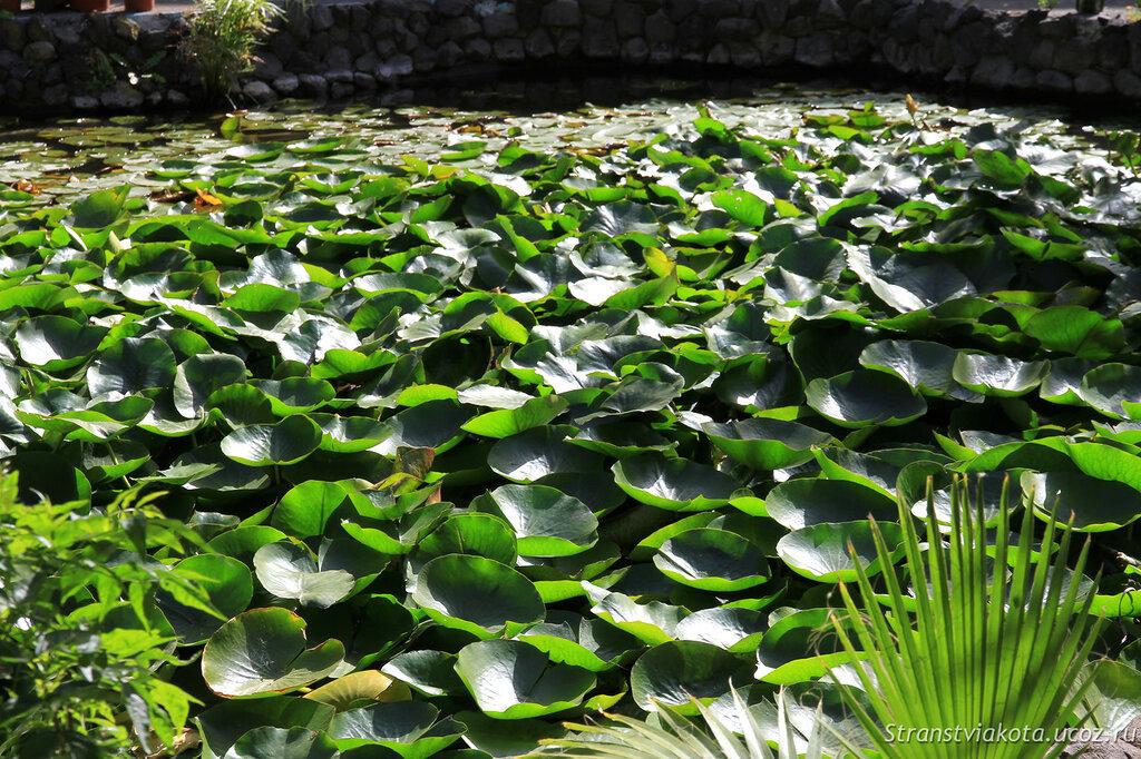 Тенерифе, Сад орхидей в Пуэрто Крус