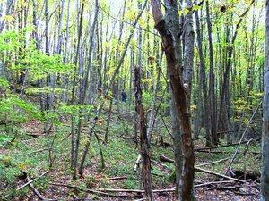 В чаще лесной ... SDC15413.JPG