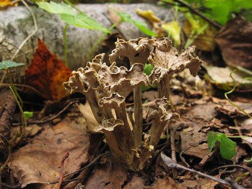 Смешанный лес. Столбцовский район, Минская область. Август 2011 г. Автор фото: Лариса Петрович