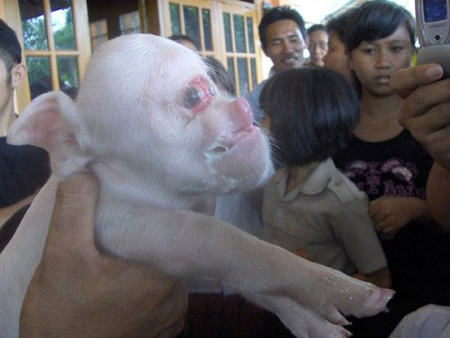 Картинки по запросу Гибрид человека и животного