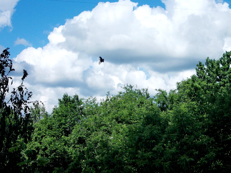 Птица в облаках.JPG