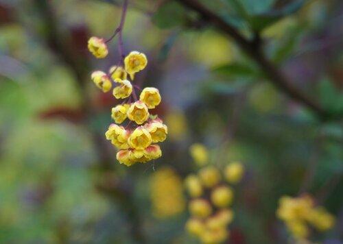 Жёлтые цветочки