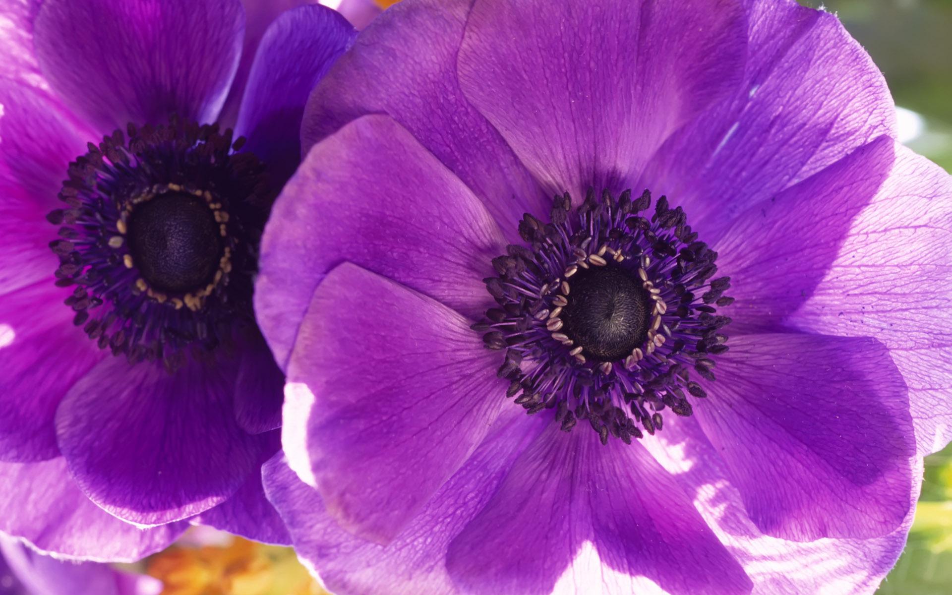 лиловый цвет