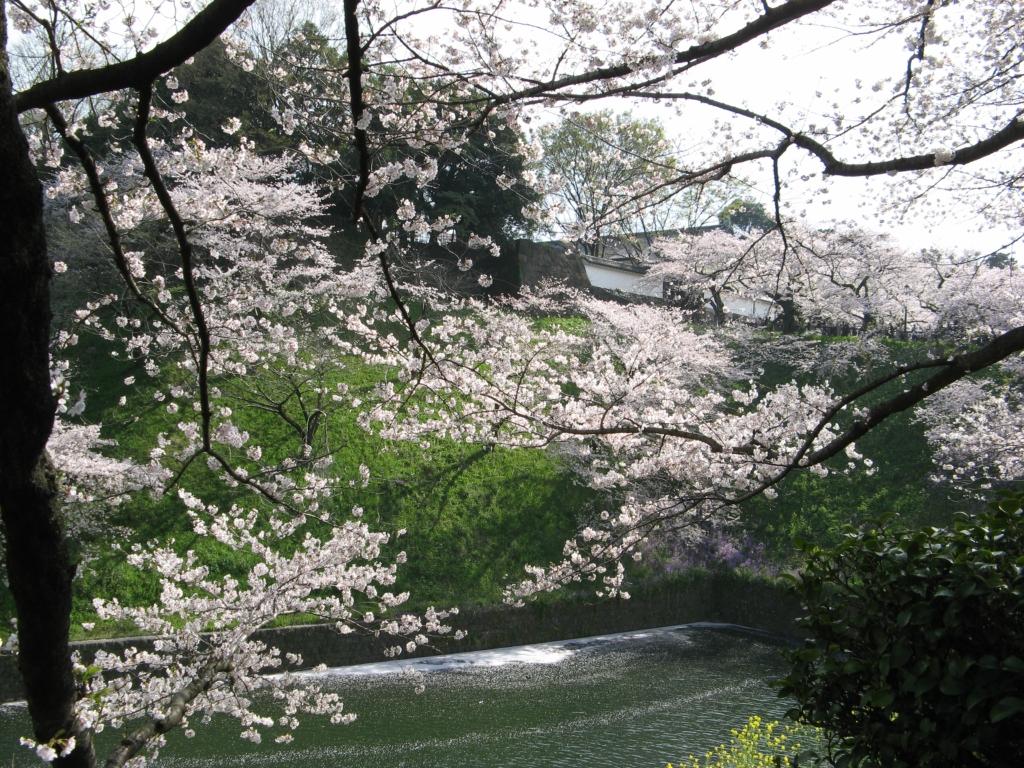 Япония. Сакура парка Китаномару и аллеи Сидоригафуси