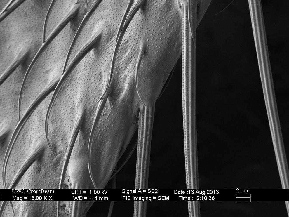 18. Плодовая муха, 3000-кратное увеличение.  19. Ткань, 200-кратное увеличение.